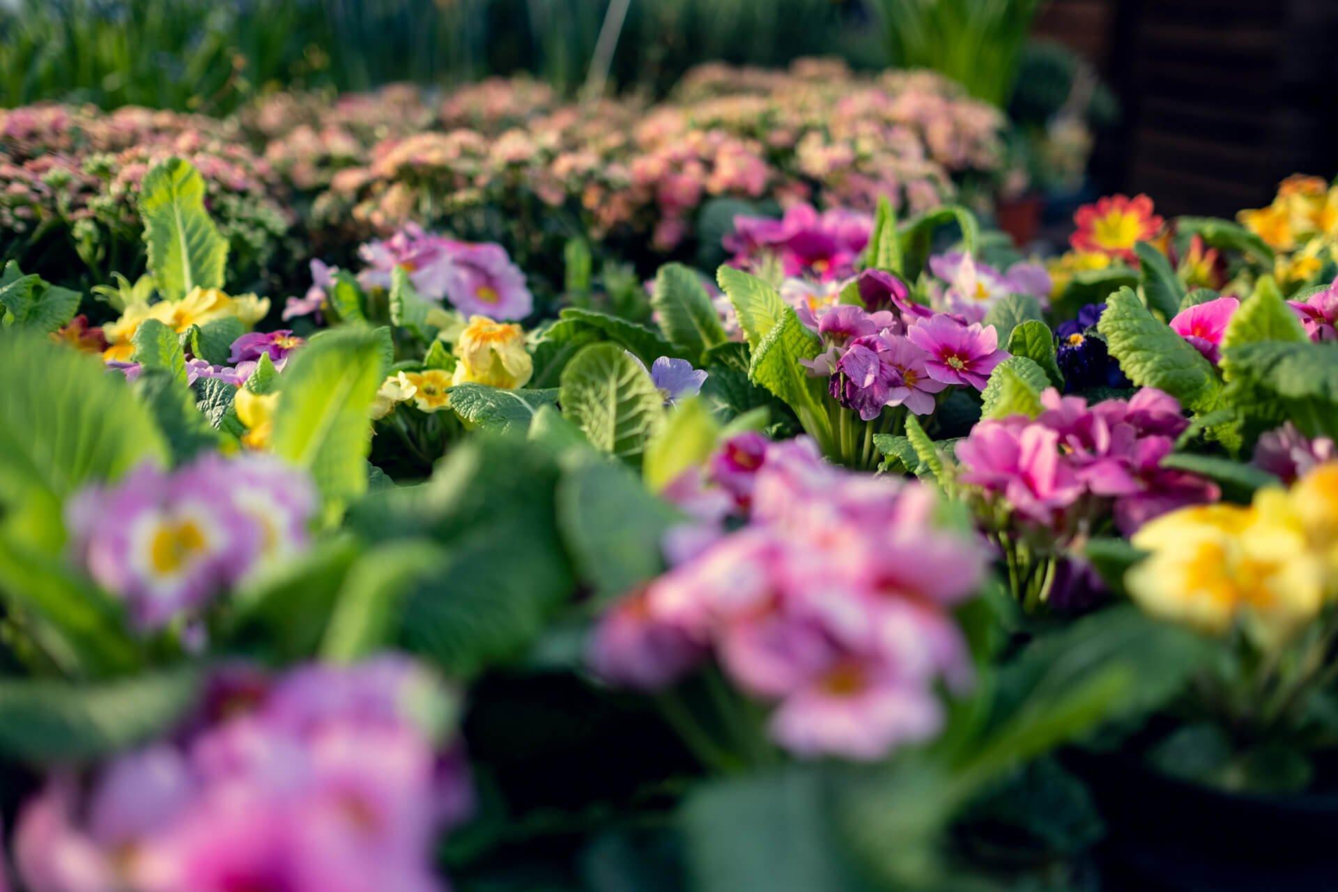 Bilde av vakre fargerike blomster